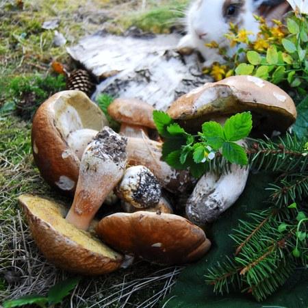 Promenade découverte champignons